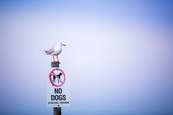 <p>No Dogs - Highly Commended - Print Open <small>&copy; Akm Imran</small></p>