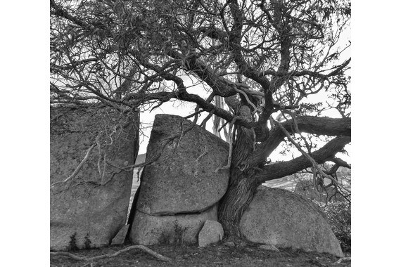 <p>Rocks and Tree - Highly Commended - Print: Open <small>&copy; Françoise Muller-Robbie</small></p>