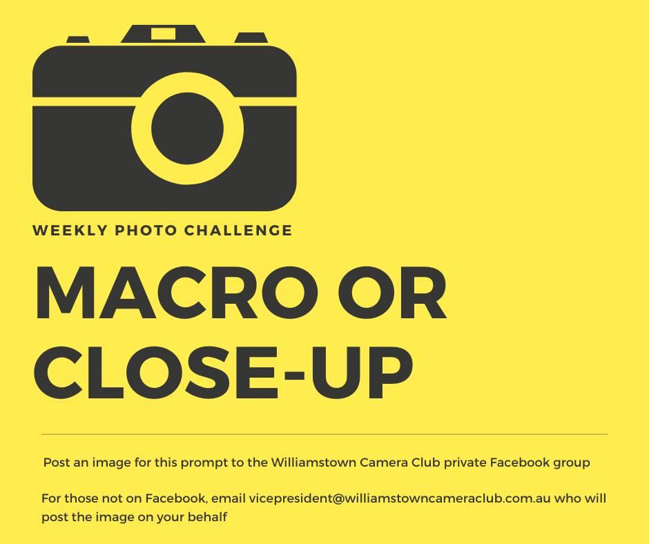 Macro or Close-Up